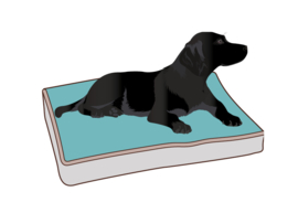 Hondenkussens