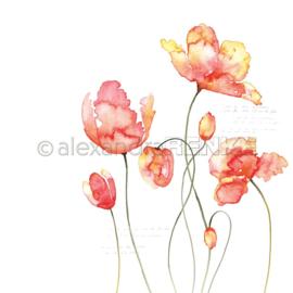 Flowers Paper Orange Tulips