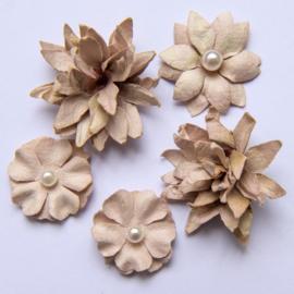 Flower Mini Series 01 Mushrooms