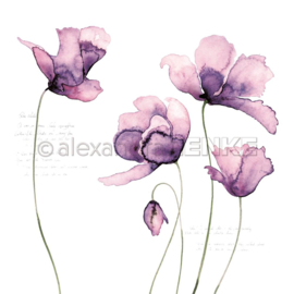 Flowers Paper Big Violet Tulips