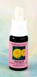 Calendula (goudsbloem) Essence 15ml