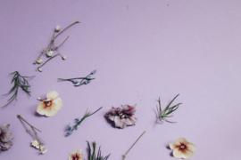 Geurkaars Spring Violet