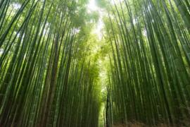 Geurkaars White Bamboo