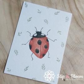 Appeloogje ansichtkaart - lieveheersbeestje
