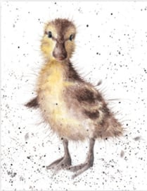 "Wrendale mini card ""Just Hatched"" - eendje"