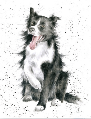 "Wrendale mini card ""Shadow"" - Border Collie"