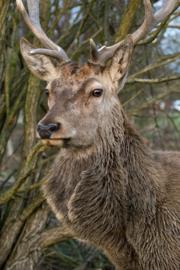 Wij verkopen het beste wild uit Nederland