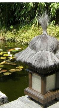hoge kwaliteit producten, mooie vissen en al het overige benodigde voor uw vijver.