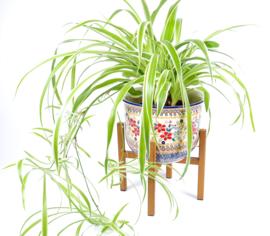 Planten pot large UNIKAT Signatuur