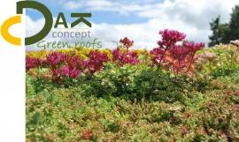 Groendak sedum wildflower opbouw systeem 6 m2- 18 m2 prijs per m2