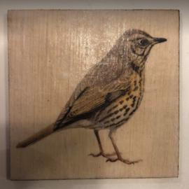 cottoncounts houten onderzetter   Vogel