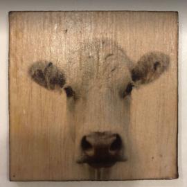 cottoncounts houten onderzetter   Koe