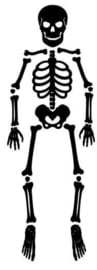 Skelet (statische raamfolie)