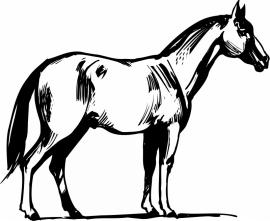 paard (kleine afmetingen) F5-019
