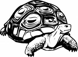 schildpad sticker F2-246