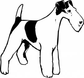 Fox-terrier F4-116 prijs vanaf