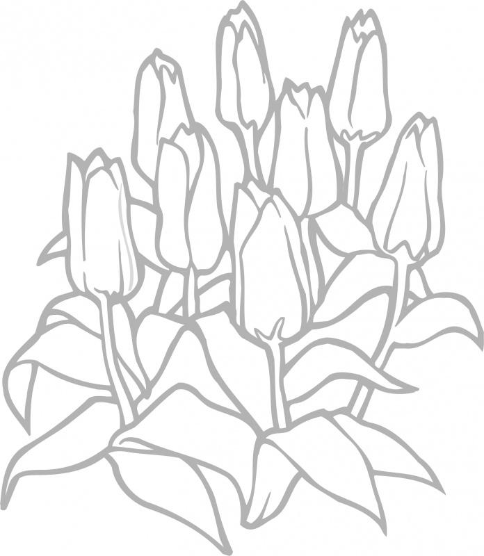 f1-025 tulpen prijs vanaf
