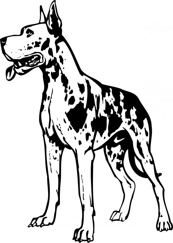 Duitse dogg A9-099 prijs vanaf