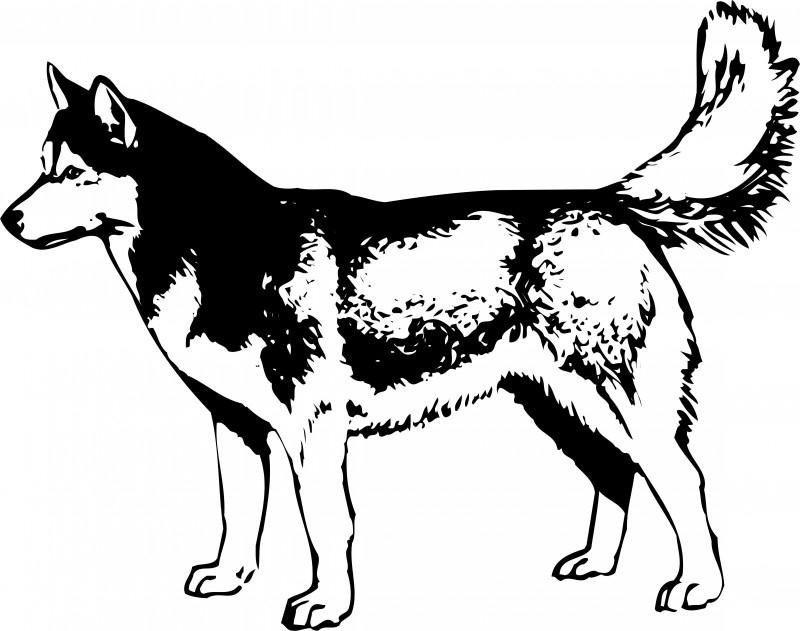 Husky F2-097 prijs vanaf