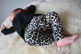 Leopard baby harem