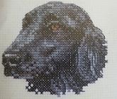 Flat Coated Retriever - black -  aida