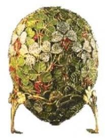 CSPG - Clover Leaf Egg