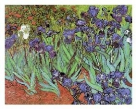 CSPG - Vincent van Gogh - Irissen - Irises