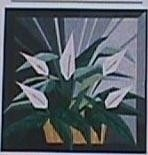 Eileen Bahring Sullivan - Vredes lelie - Peace Lily