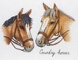 Jet - Landelijke Paarden - Country Horses