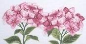 UB Design - Ulrike Blotzheim - Pink Hydrangeas