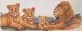 Leeuwen Familie - Lions Family aida