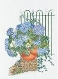 Blauwe Hortensia - Blue Hydrangea