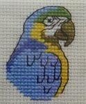 Blue parrot aida