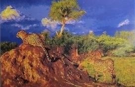 Eder - Luipaarden - Leopards