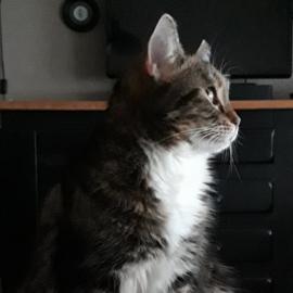 Trudi is een gezond en blij vegan katje