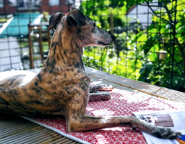 Charlotje is aangesterkt met vega-voer