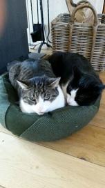 BecoBed kussen (s) - voor hond en kat