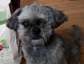 Tygo eet al ruim 10 jaar vegan
