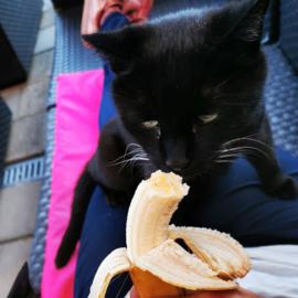 Qashqa houdt van fruit