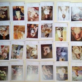 Kaartenset (32 stuks!) met romantische olieverfschilderijen.