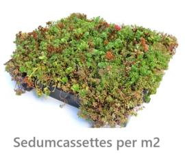 SEDUMCASSETTE per m2 (prijs v.a.)