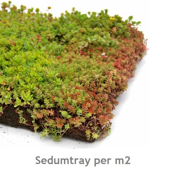 SEDUMTRAY 'Light' per m2 (prijs v.a.)