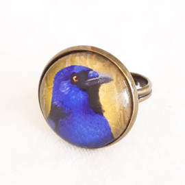 Cabochon ring bird BLUE-BELLIED CROW
