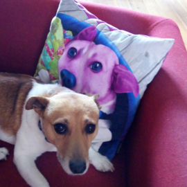 Examples of throw cushions with your own pet on it.