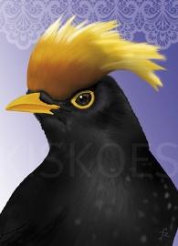 YELLOW-CRESTED BLACKBIRD XL