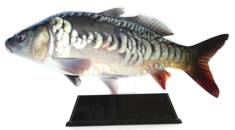 Vistrofee Real Fish – Karper 23 cm