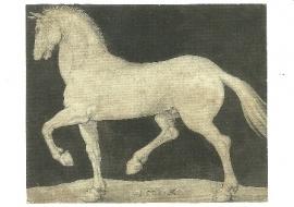 Dravende hengst, Albrecht Dürer