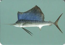 Vis uit Naturalis, von Siebold