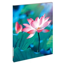 Blankbook Tushita, Pure lotus