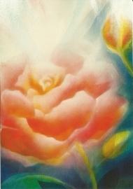 Rode roos, Jan de Kok